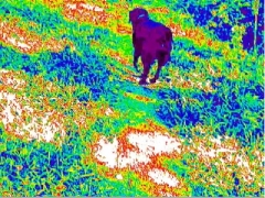 psychedelic dog image